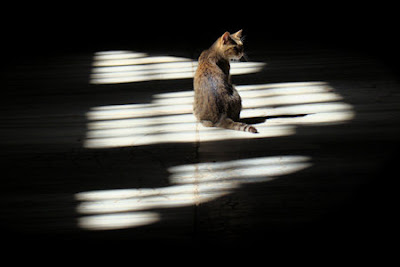 Cat in the spotlight
