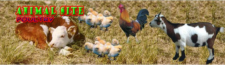 Animal Site/Poultry