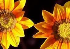 Flora currais- novense