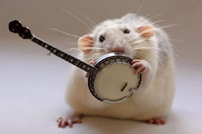 Ratos músicos