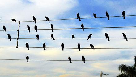 Pássaros se transformam em música