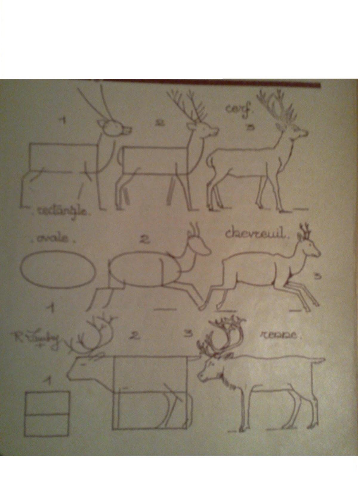 Dessins astuces pour debutants comment dessiner cerfs chevreuils - Comment dessiner un cerf ...