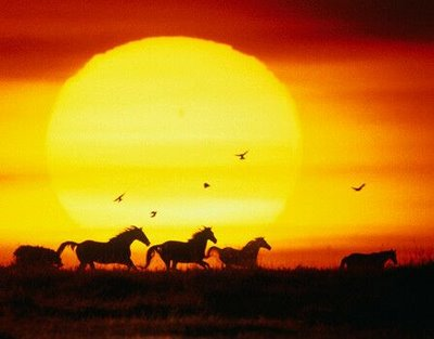 Όμορφες εικόνες... Cavalos+selvagens