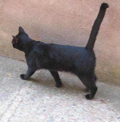 un gat negre a Taormina