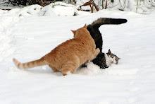tiger i snoopy
