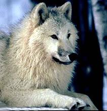 whitewolfreads