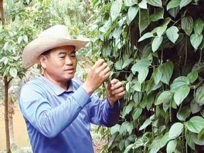 ปลูกพริกไทย รายได้นับแสนบาทต่อเดือน! กับ 'ลุงประมาณ', รักอาชีพ, อาชีพเสริม, รายได้เสริม