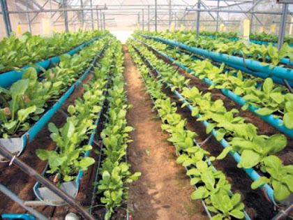 ยกแคร่ปลูกผักปลอดสารพิษ อีกหนึ่งความสำเร็จของเกษตรไทย