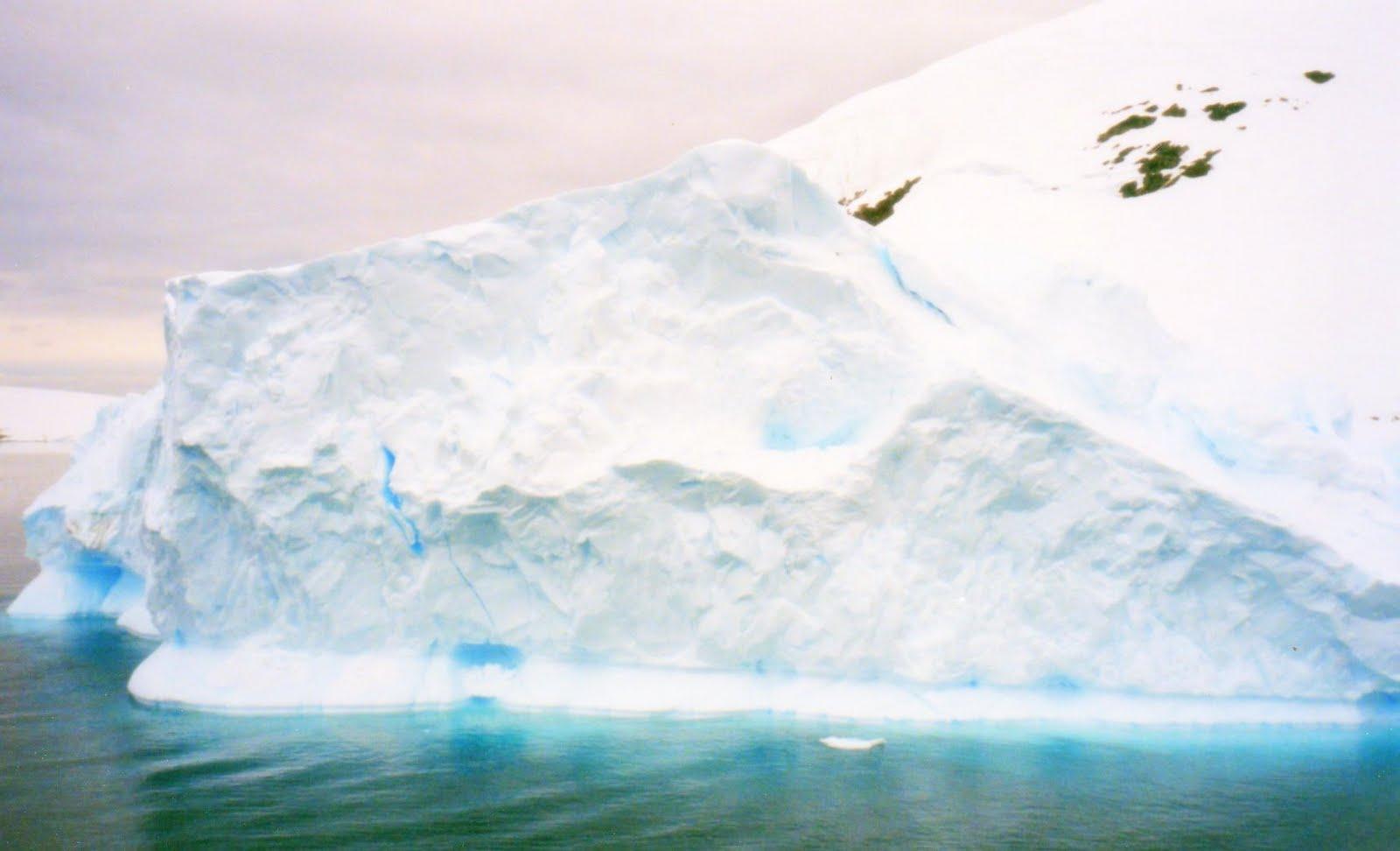 Low carb cuisine antarctica for Antarctica cuisine