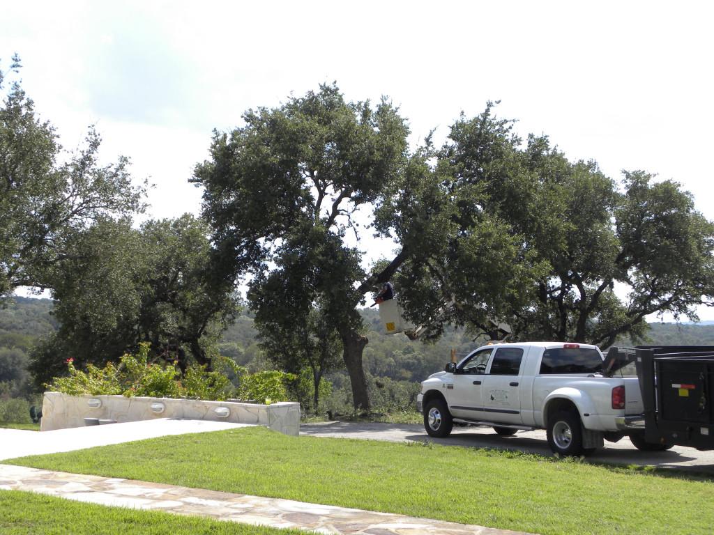 diane u0027s texas garden unpleasant but necessary garden maintenance