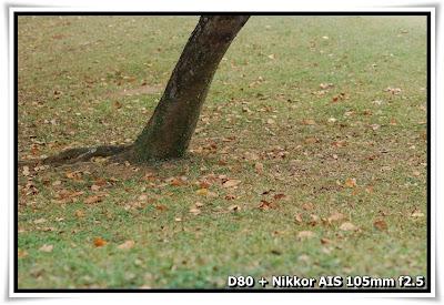 元朗公園(Yuen Long Park)