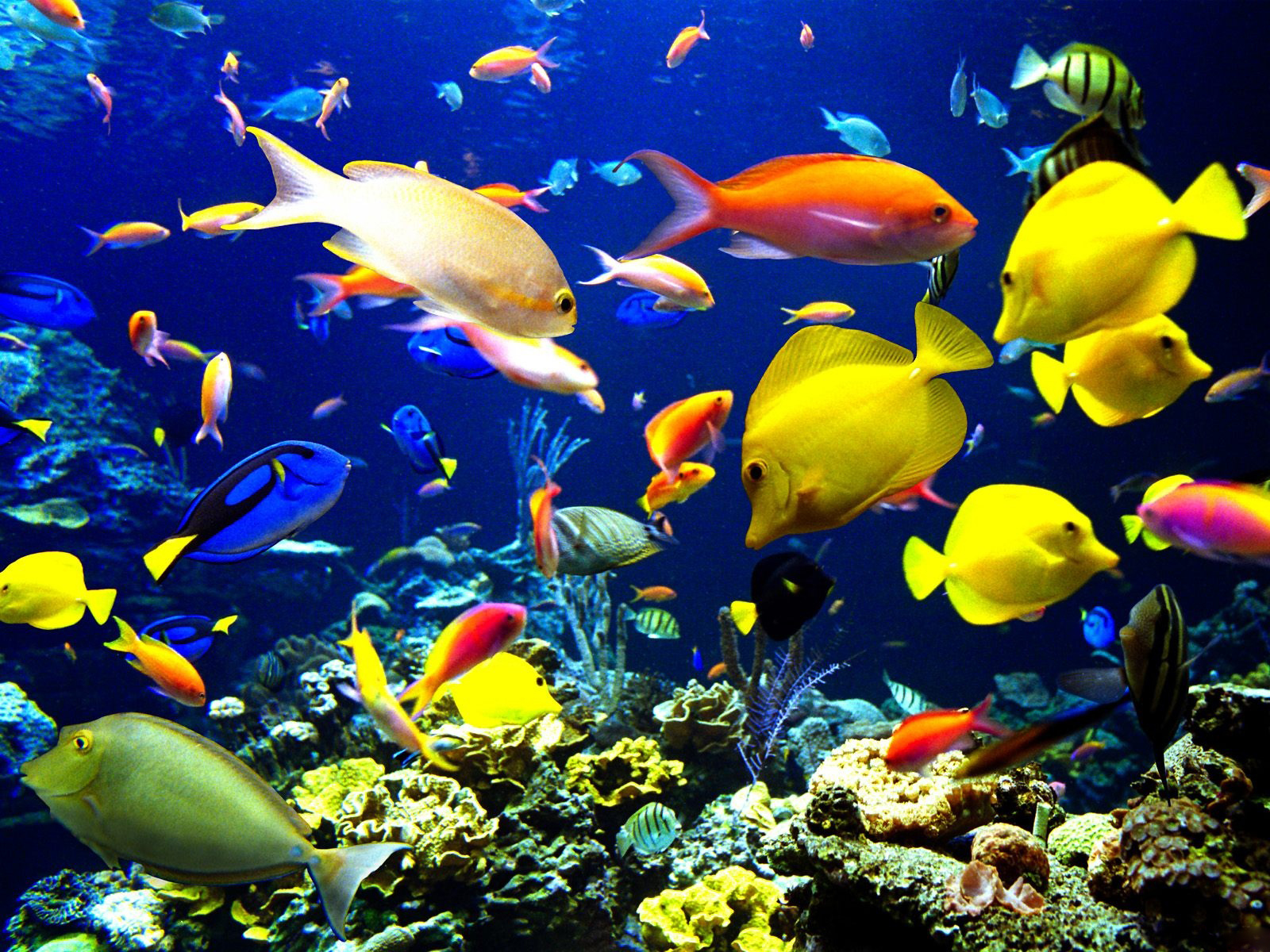 Fish Beautiful and Colourful Wallpaper