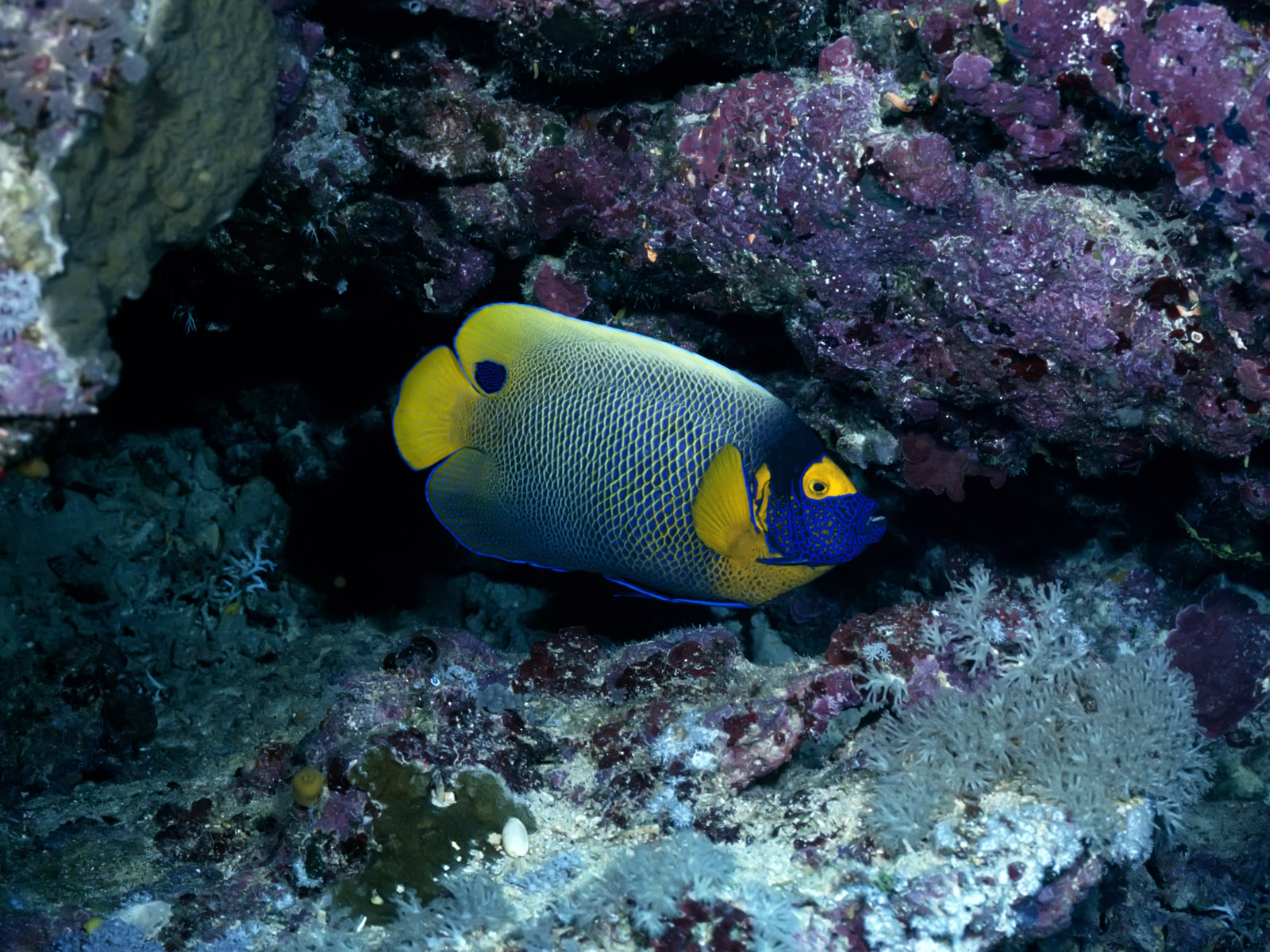 best wallpapers colorful fish wallpapers