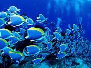 wallpaper hd underwater wallpaper hd