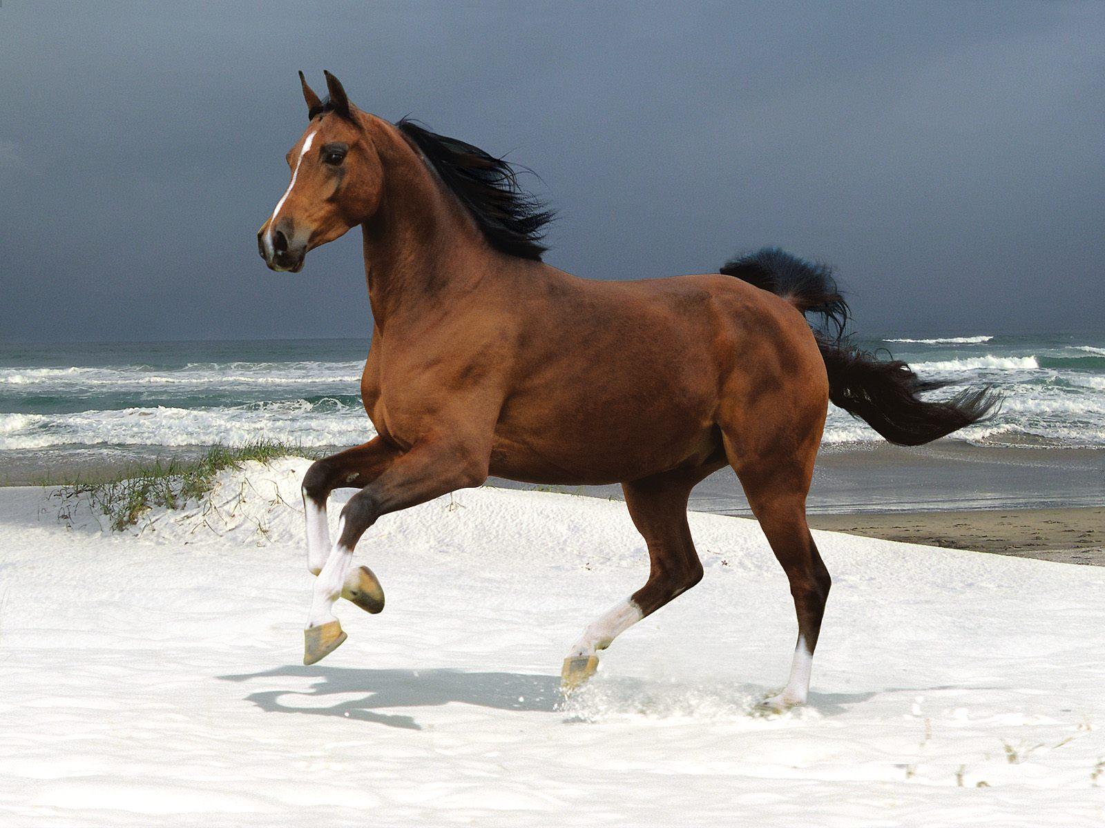 Cool   Wallpaper Horse Snow - beautiful+horse+wallpaper  Trends_100117.jpg