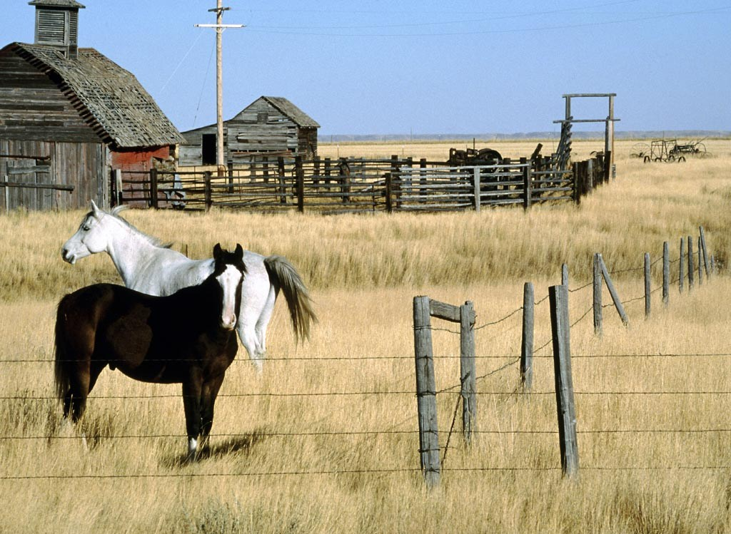 Best wallpapers horses wallpapers for Horse farm