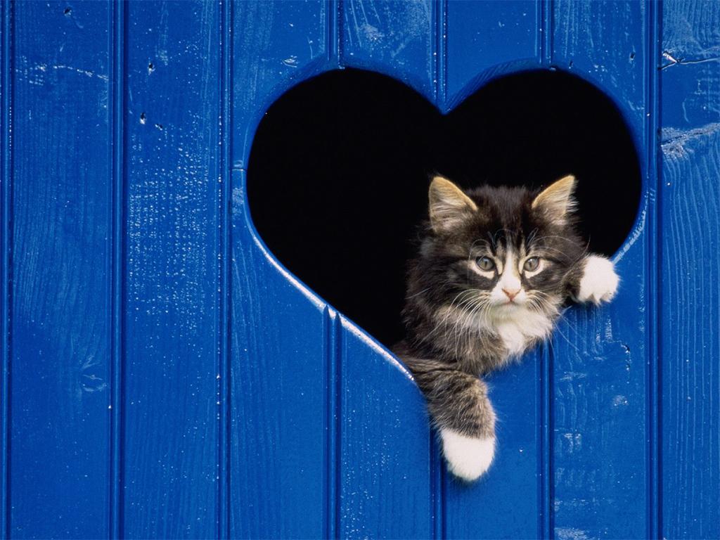 Best wallpapers cats wallpapers - Caterpillar wallpaper ...
