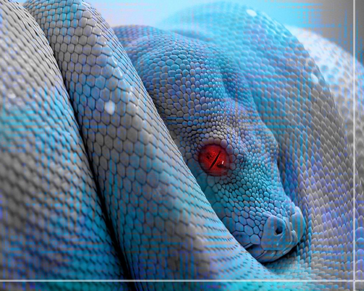 http://1.bp.blogspot.com/_sRGU_JXOz6E/TSsE-ctUSAI/AAAAAAAABJk/nX5ZPNDAVnI/s1600/animals_reptiles-blue-snake-wallpaper_1.jpg