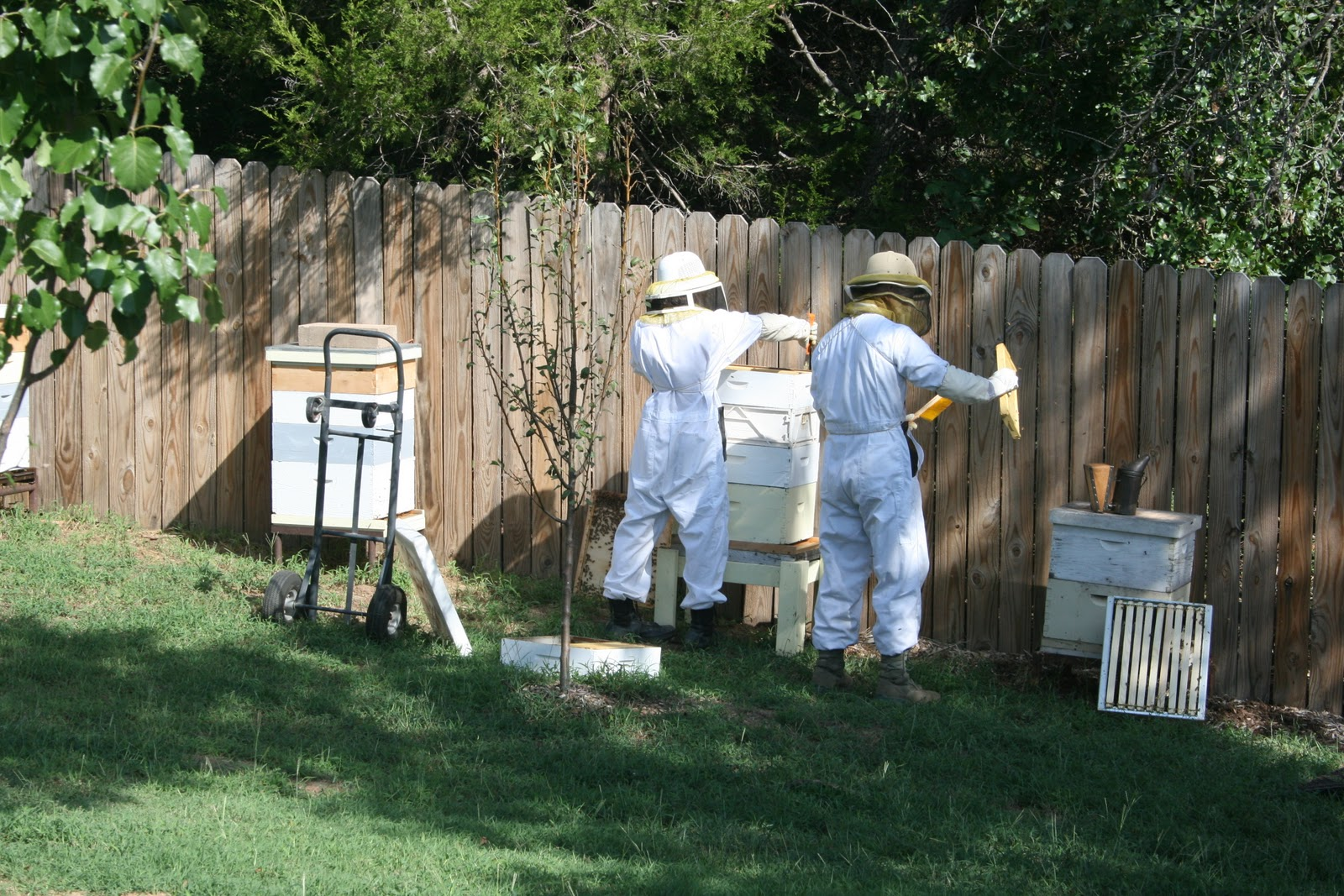 the family cochran harvesting honey