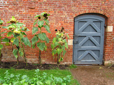 Garden Door and Sunflowers