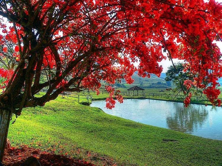Oh! tá dando uma vontade de acampar debaixo desta árvore e nadar na represa...