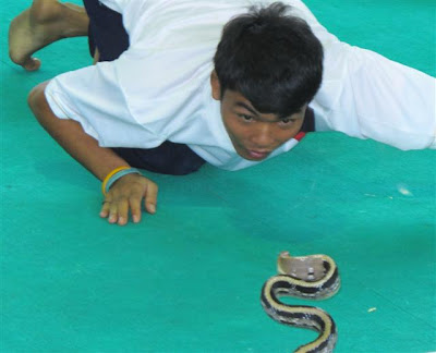 Pattaya N.S.P. International snake show Thailand