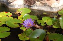Las lilas... flotando