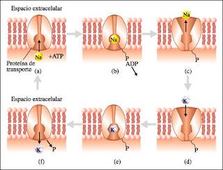 es la fructosa perjudical para las personas con acido urico acido urico funcion en el organismo como calmar el dolor que produce la gota