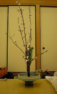 桜正風体、正面