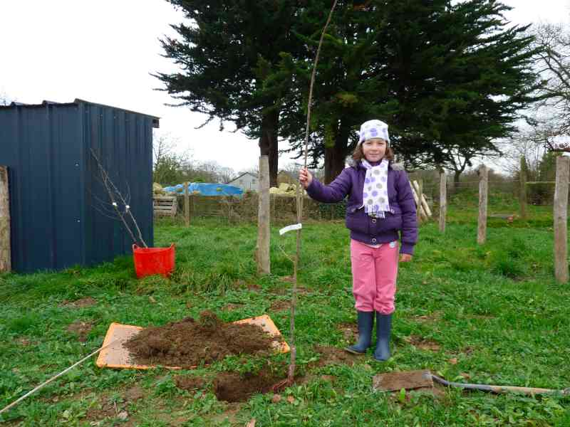 Permaculture in brittany forest garden for Permaculture bretagne