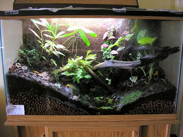 1000+ images about Exterieur on Pinterest | Terrarium ... 10 Gallon Dart Frog Vivarium