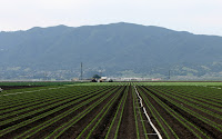 Farming in a California coastal valley