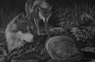 Mexican wolves white charcoal drawing on black paper