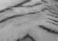 drawing whiskers