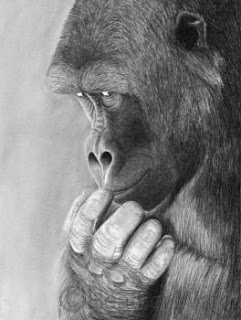 gorilla charcoal drawing