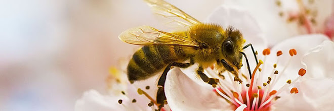 Η μέλισσα με την επικονίαση συμβάλλει στην ποικιλότητα της φύσης