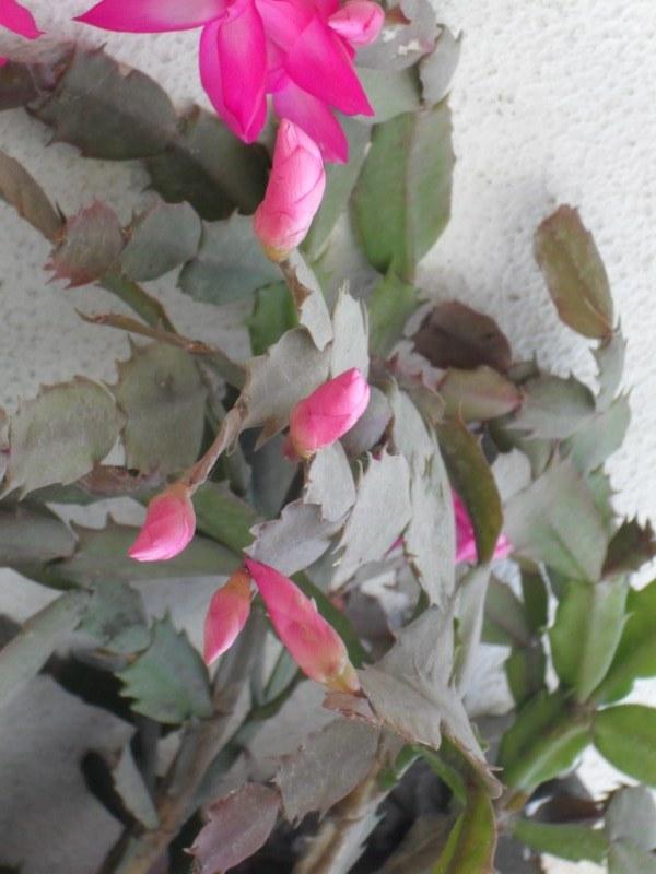 Botânico cria aplicativo que identifica plantas e flores - Fotos De Plantas E Flores