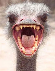 Ostrich Dentition or . . .