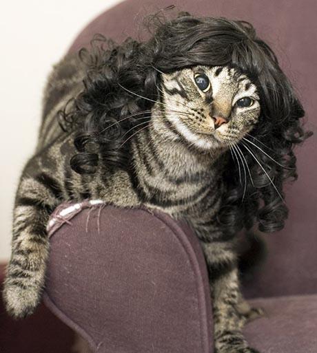 http://1.bp.blogspot.com/_sd0GBl3aeeE/S9ecjlXd3iI/AAAAAAAAAYQ/NJcdzI1uFVQ/s1600/cat_fashion_sense_03.jpg