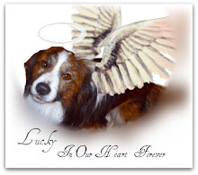 In Memory of Lucky