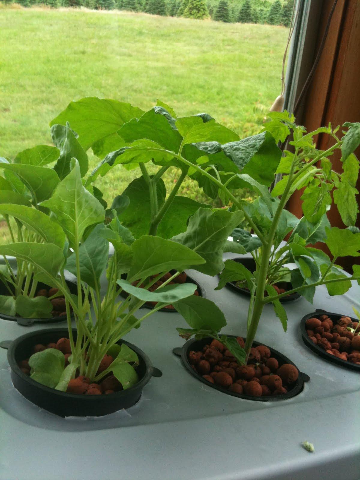 Garden Of Misfit Plants Aeroponic Veggie Garden June 20