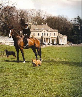 Corgi Cava Corgis Cavalier King Charles Spaniel Pembroke Welsh Corgi ...