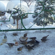 ptaki za oknem