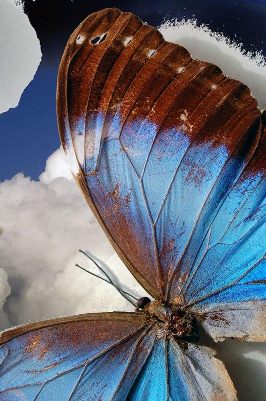 [borboleta]