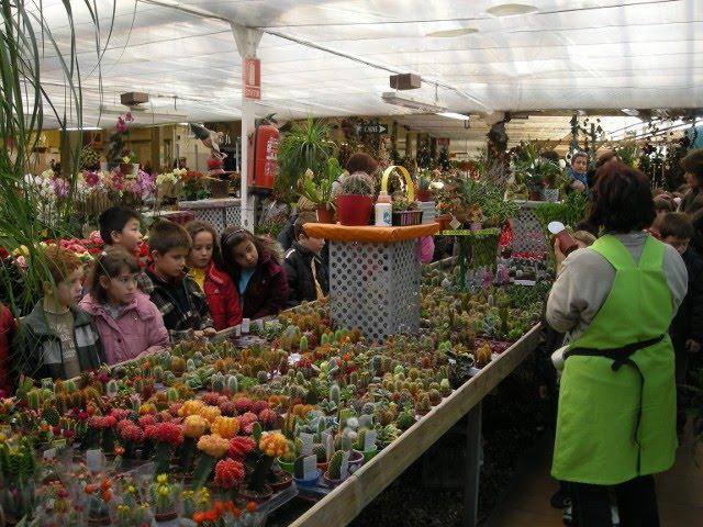 Vivero sena for Importancia de las plantas ornamentales