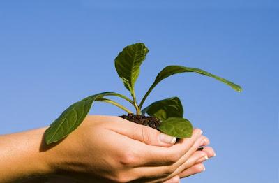 save environment plant