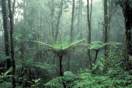 Floresta Estadual do Rio Gregório
