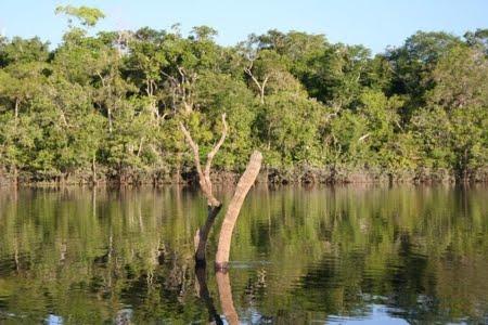 Floresta Estadual do Rio Urubu