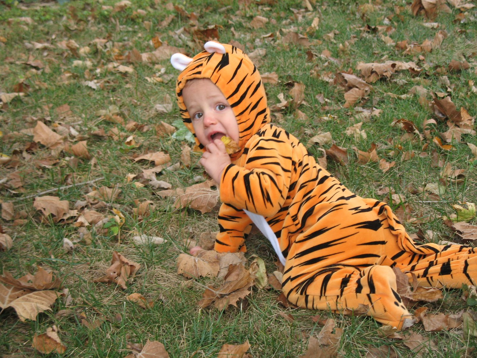 Lions and tigers and bears 019 jpg