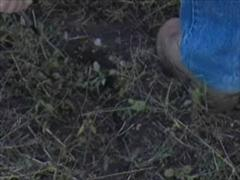 [bigfootprint]